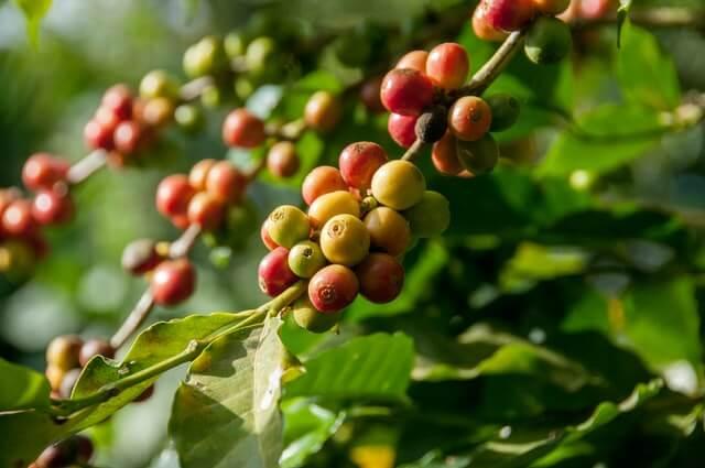 Nachhaltigkeit Danesi Caffè